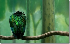 digital-art-background-1920x1200-1001010